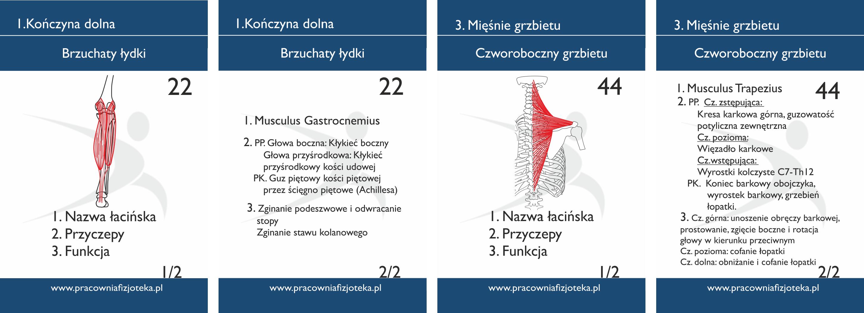 fiszk-anatomiczne